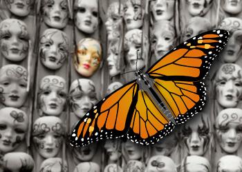 Programmazione Monarch e la farfallina