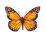 Programmazione Monarch Step 2: Il trauma di una nascitaprematura
