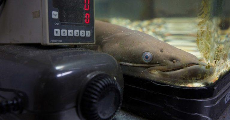 010621catfish1-768x403-1