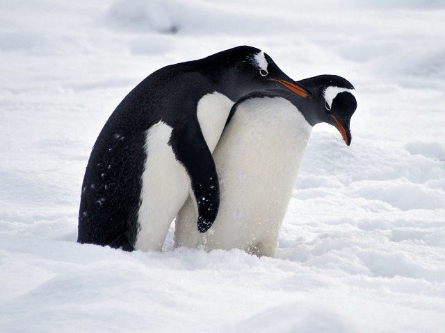 antarctica-640x480-1
